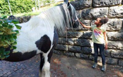 """""""Pferde sind doch was für Mädchen!"""""""